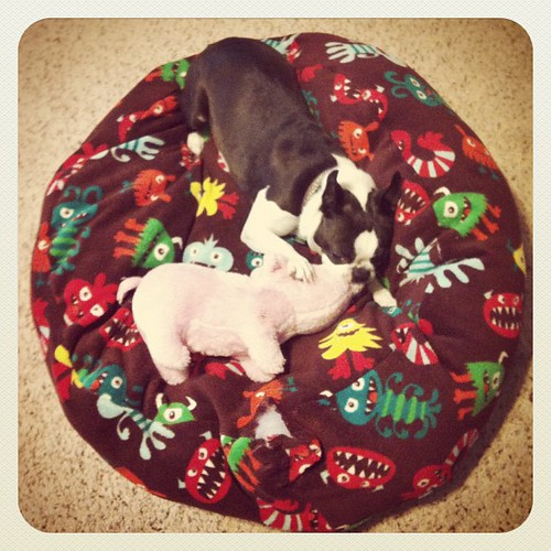 Aiko and her pig on the new dog bed. #petstagram #sewing