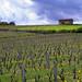 #19 Petite cabane dans le beaujolais