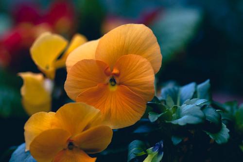 flowery stuff 2