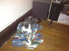 kitty blanket 3