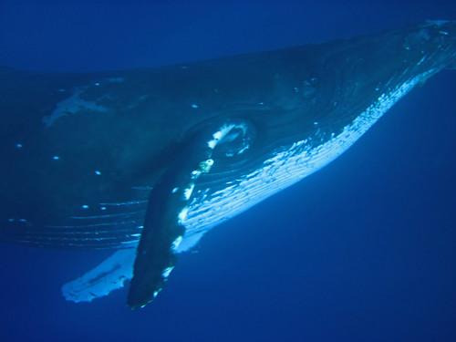 ... or a whale...