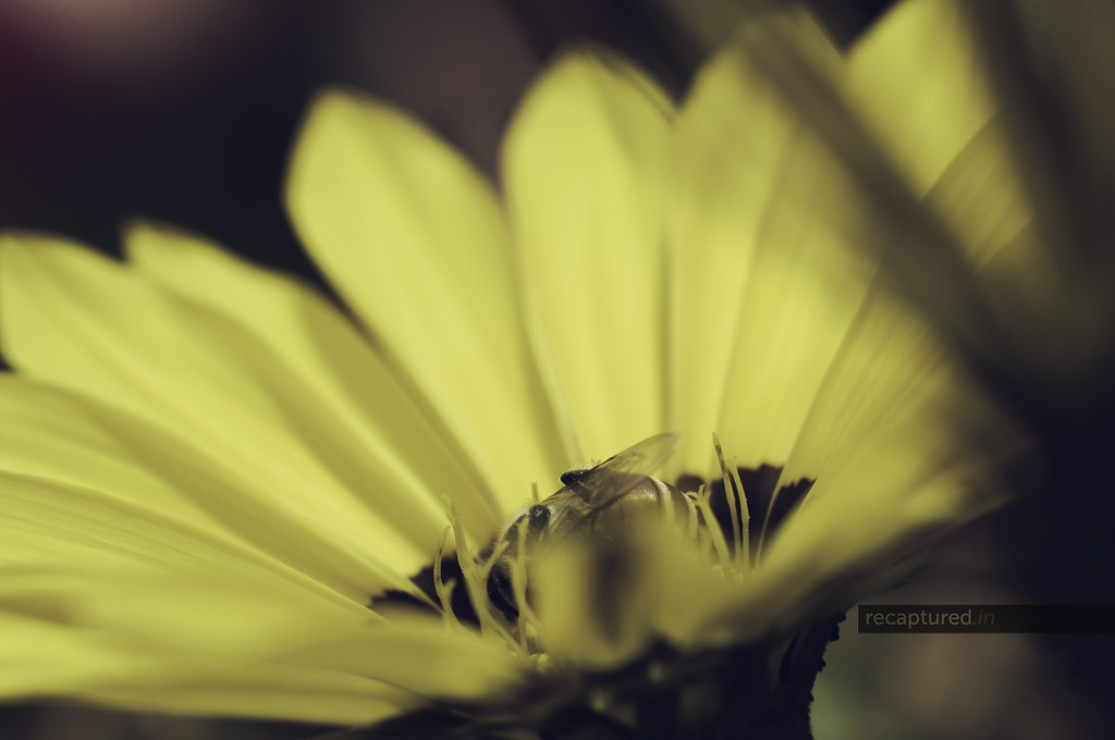 Shy Bee: March 2012