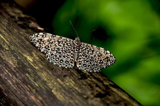 6833717550_53a1111113_z Jardin Botánico del Quindío - Armenia, Colombia Colombia Zona Cafetera  Zona Cafetera Quindio Nature Mariposario Guadua Garden Colombia Butterfly Botanical Bamboo