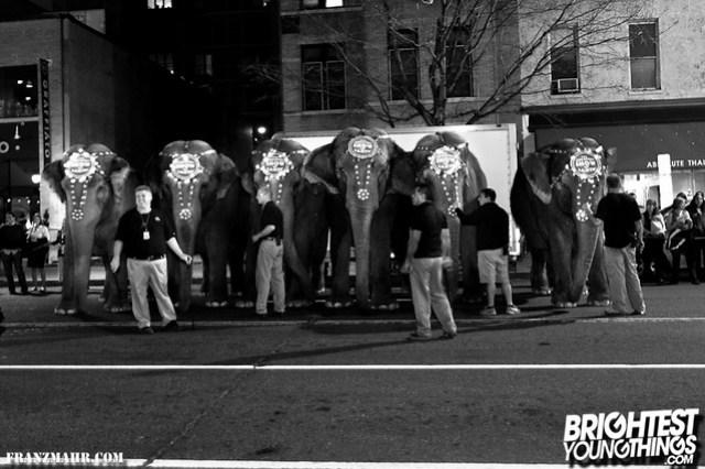 12-03_elephants119-113