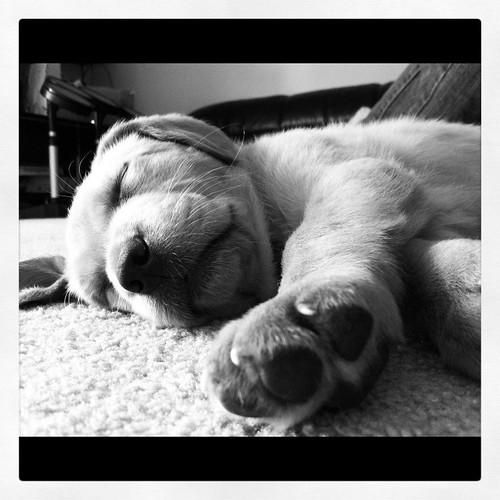 Buddy's naptime