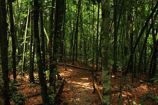 6979851689_78fe0e1d04_o Jardin Botánico del Quindío - Armenia, Colombia Colombia Zona Cafetera  Zona Cafetera Quindio Nature Mariposario Guadua Garden Colombia Butterfly Botanical Bamboo