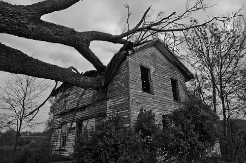 Fallen Tree House