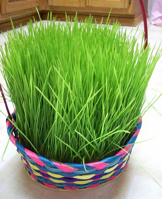 Home Grown Easter Grass