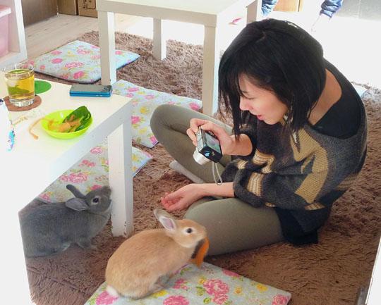 Rabbit Cafes Enjoy Cat Cafe Popularity