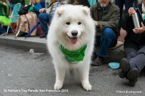St Patrick's Day Parade San Francisco 2012