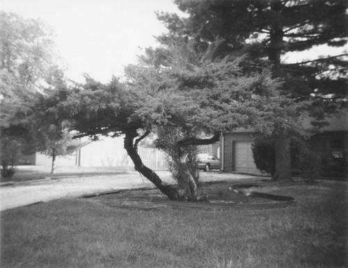 Squat Tree