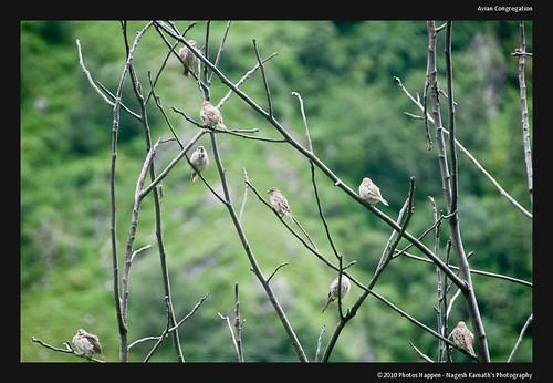 Avian Congregation