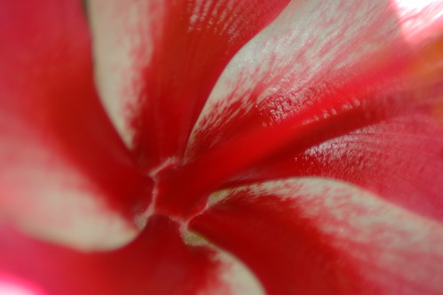 Hibiscus by terrijane01