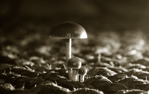 1994-wbsheet06-frame11-mushrooms