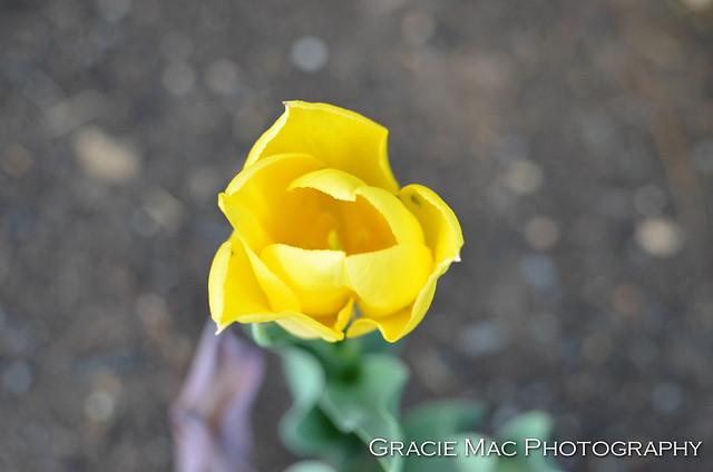 1204_spring_050