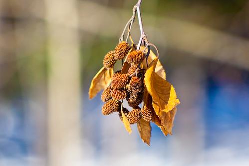 Autumn reminder