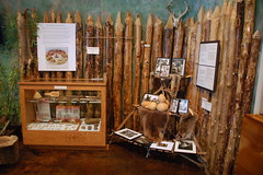 Colleton Museum Display