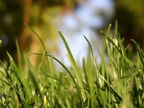 Wintergreen by Jason A. Samfield