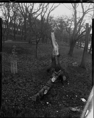 Fallen Tree, Crown Graphic - Adox 100 by Sibokk
