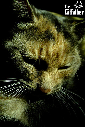 kitty corleone [smartphone wallpaper]