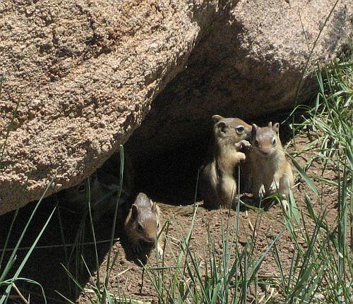 Conspiring chipmunks