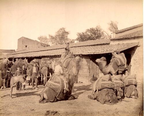 The Camel Station In Smyrna / Izmir