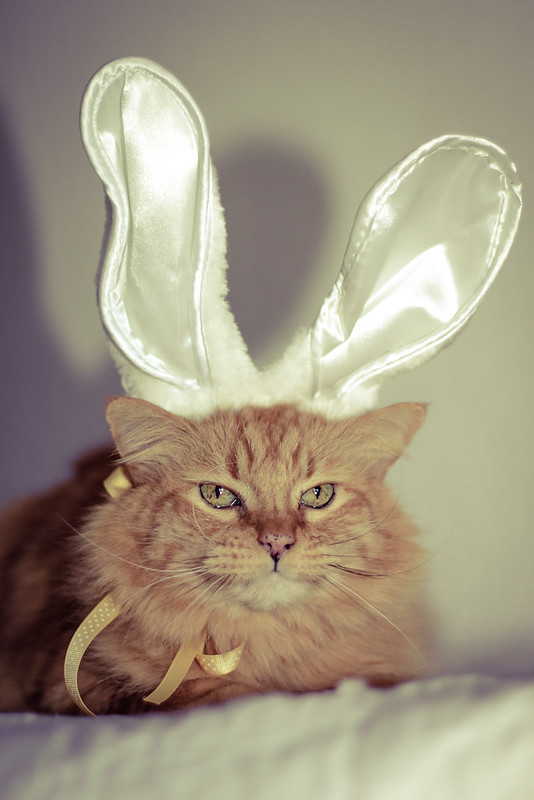 Puddy says Happy Easter