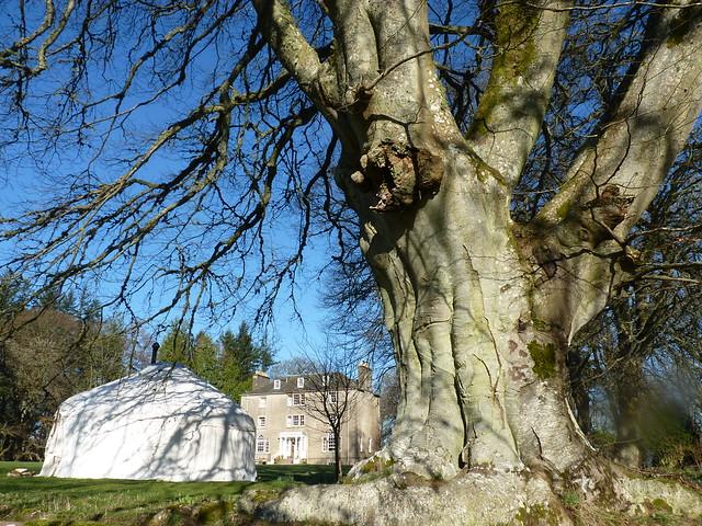 Tree, tent & house 2