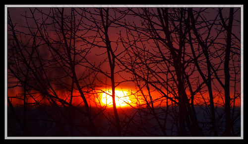 58/366 - The sun rising behind the trees by Flubie