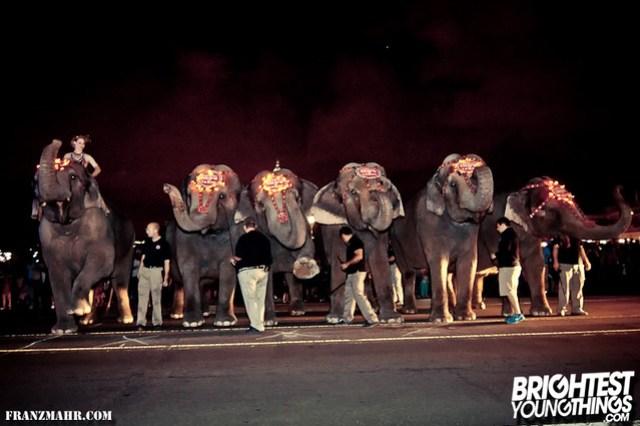 12-03_elephants119-35-Edit-2-Edit