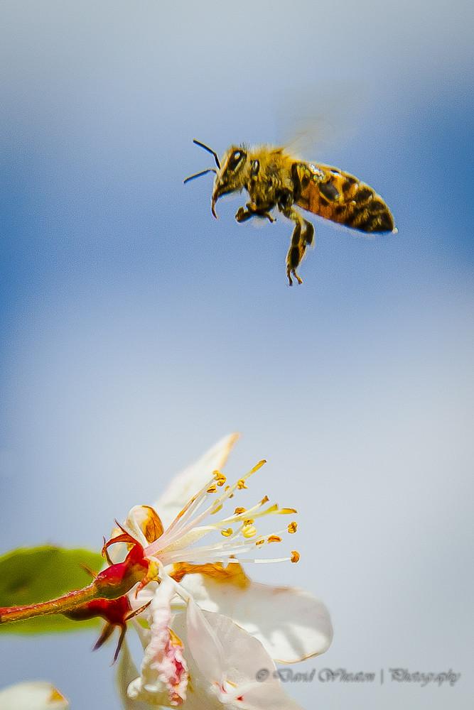 1204_honeybee_00001