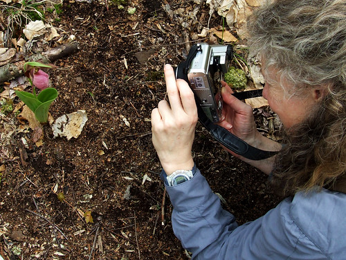 photographing ladyslipper