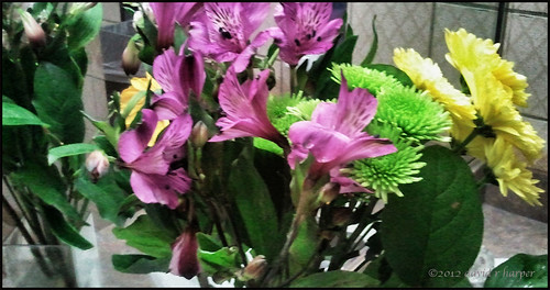 05.30.2012 :: 366/151 ...::... Restroom Flowers by Echo9er