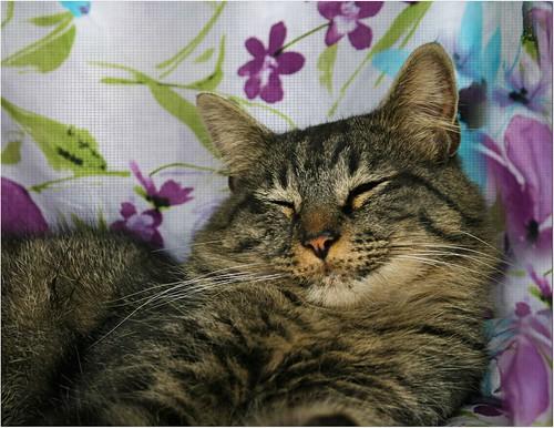 ♥❤♥ Puki ♥❤♥ by Viola & Cats =^..^=