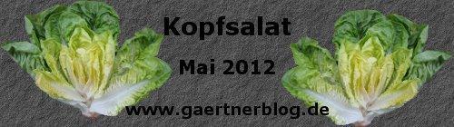 Garten-Koch-Event Mai 2012: Kopfsalat [31.05.2012]