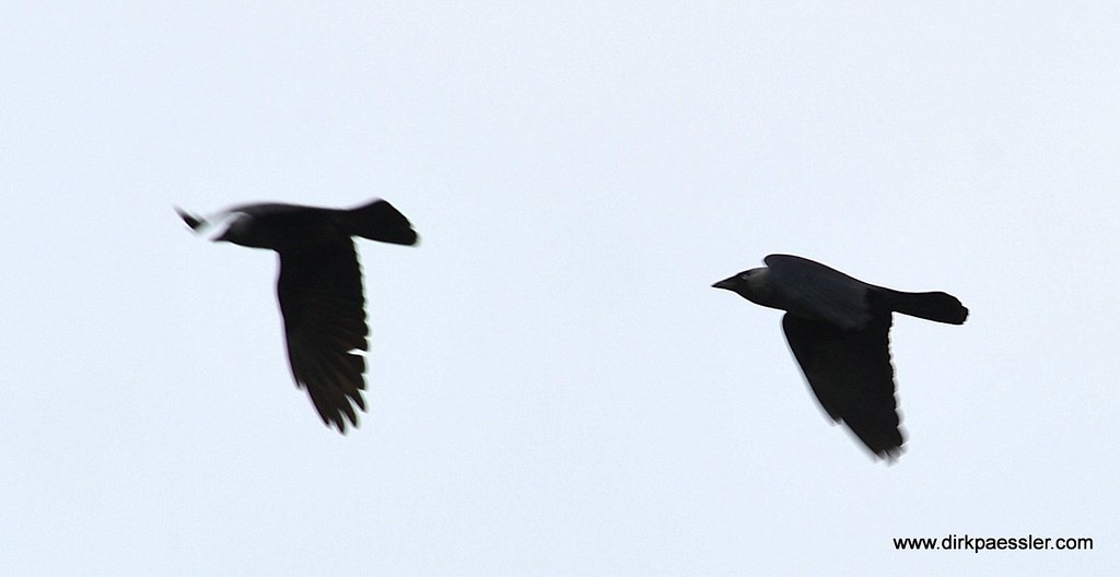 Birds by Dirk Paessler