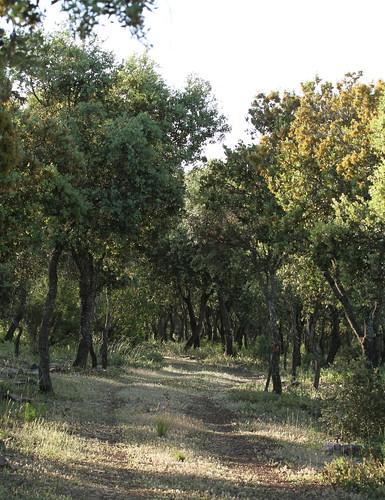 2012_05_18 PIC - Oak Woods  02