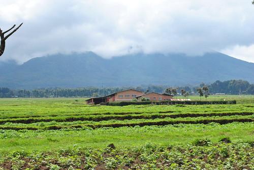 Potato growing trials at high altitude of 2200 metres