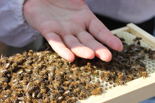 Bees etc 031