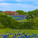 JVP_20120413_BluebonnetTrail7019