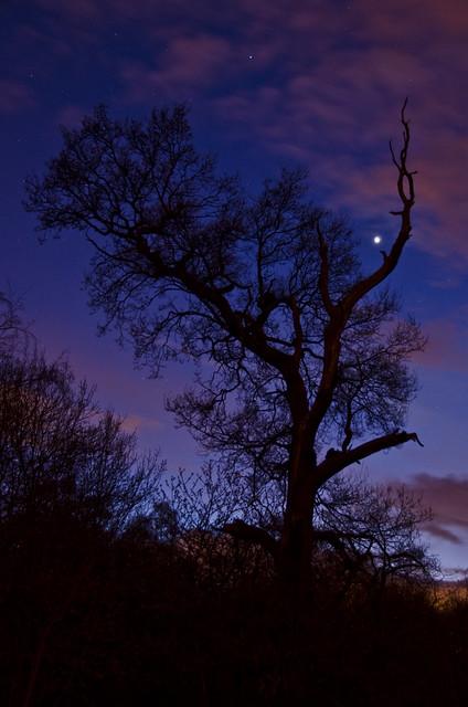 Venus in the spooky tree