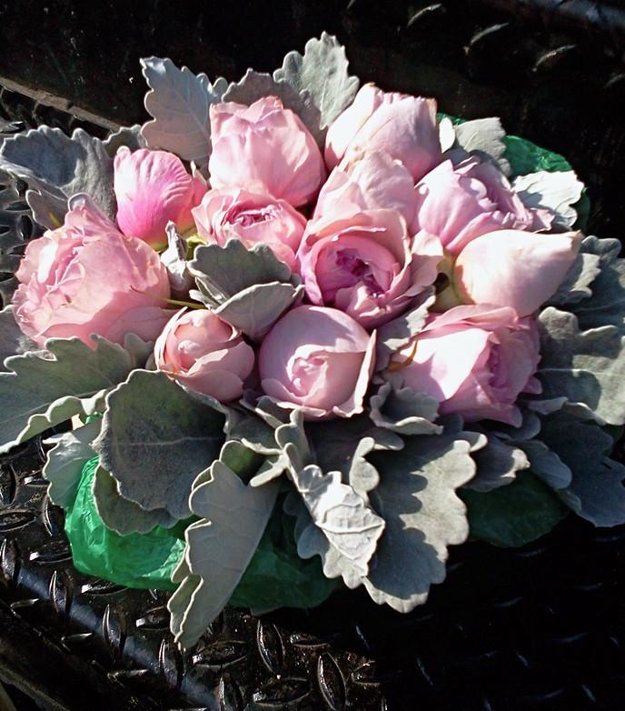 rosalind-1