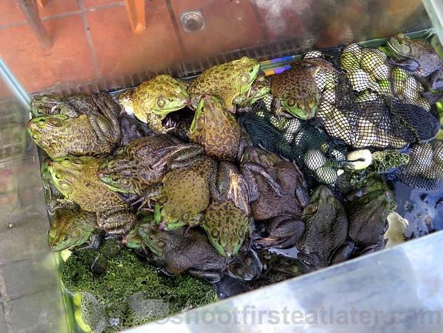 Tamsui, Taipei- live frogs