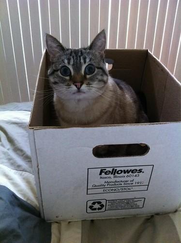 Cat in box!