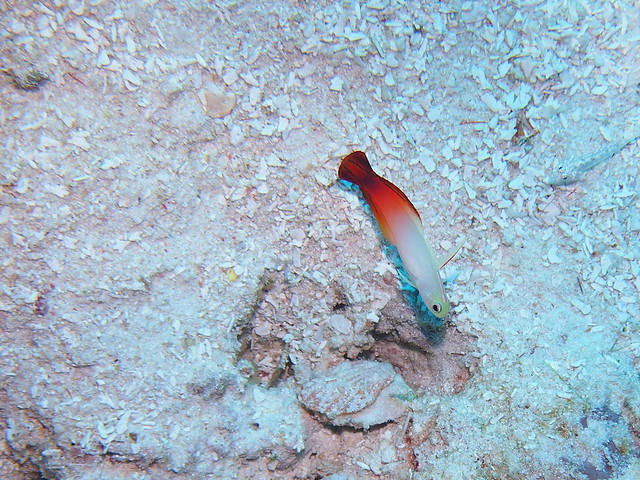 Wakatobi: Colours of the Reef (6/6)