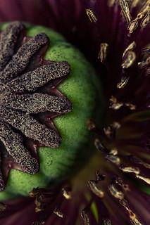 flower detail 1