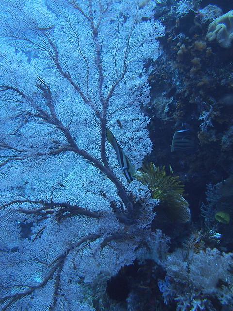 Wakatobi: Pristine Coral (5/6)