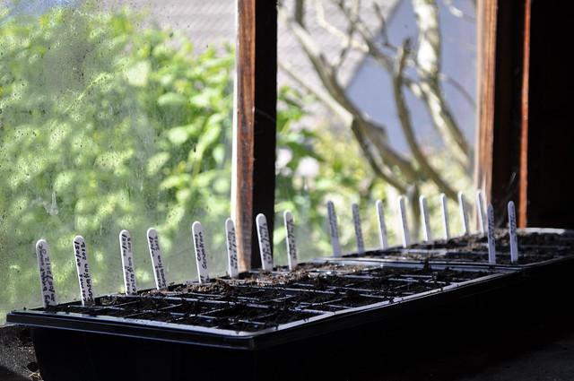 2012-05-20 Seedlings 001