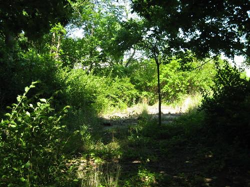Abandoned Fall Creek Road