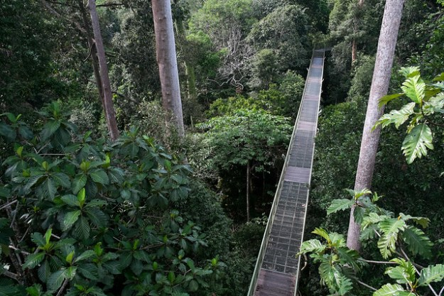 Canopy walk. Rainforest Discovery Centre